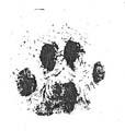 FDC Willard Pawprint